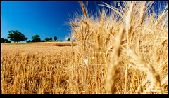 170625-2528-XM1.jpg (hopeless128) Tags: wheat france sky eurotrip fields 2017 nanteuilenvallée nouvelleaquitaine fr