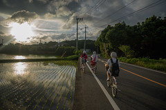 A fairly typical rural evening in Japan. (Yasuyuki Oomagari) Tags: home girls bike bicycle three sunset rice field ukiyoe homing evening red schoolgirl helmet d810 zeiss distadont225 nikon light shadow reflection carlzeiss