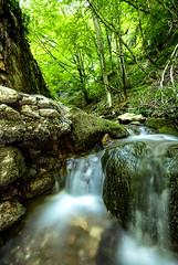 Nemona Vacuuna (simone_aramini) Tags: nature longexposures nationalgeografic natura ngc inalto wildlife nikond200 naturallight nikon