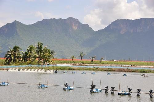 parc national sam roi yot - thailande 72