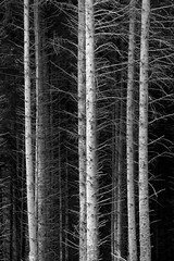 Three's a crowd. (Sean Hartwell Photography) Tags: gidleigh chagford dartmoor dartmoornationalpark trees tree three 3 trunk abstract forest wood woodland england straight branches landscape