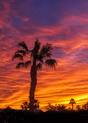The Silhouetted Palm Tree (http://fineartamerica.com/profiles/robert-bales.ht) Tags: arizona foothills forupload haybales land palmtree people photo places plants projects states sunsetorsunrise sunrise sunset street southwest red yellow landscape silhouette clouds desert twilight sunrays orange nature beautiful colorful bright scenic stunning mountain morning sensational spectacular cirrus southwestern horizon sonoran panoramic awesome magnificent peaceful surreal sublime magical spiritual inspiring inspirational tranquil sunlight wallpaper yuma robertbales