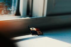 La bandera mas linda del mundo (Cristaly Films) Tags: panama flag bandera macro cf cristalyfilms photography canon