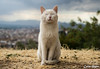 Gato Muso en mirador cerca del Cementerio San José - Granada 1 (Celia_Huete) Tags: cat gato posing posando poser miau meow landscape paisaje loveit byn blancoynegro bw blackandwhite cloudy nublado fisheye sonya77 sony a77 granada españa spain