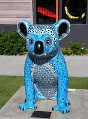 Oceania (Gillian Everett) Tags: hello koala portmacquarie nsw australia