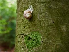 Tree shell (I) (Modesto Vega) Tags: nikon nikond600 d600 fullframe spiral geometry espiral geometria snail caracol tree arbol