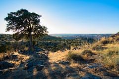 Toledo al fondo (mause_1960) Tags: toledo landscape castillalamancha españa spain paisaje patrimoniodelahumanidad arboles ocasos puestadesol