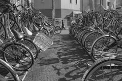 WALKS OF LIFE (ajpscs) Tags: ajpscs japan nippon 日本 japanese 東京 tokyo city people ニコン nikon d750 tokyostreetphotography streetphotography seasonchange summer natsu なつ 夏 street shitamachi monochromatic grayscale monokuro blackwhite blkwht bw blancoynegro othersideoftokyo strangers blackandwhite monochrome urban walksoflife 白&黒 streetoftokyo parking bicycle cycle bike