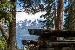 The wild (Bast3d) Tags: peaceful paisible arbre tree table nature montagne mountain wild