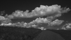 Towards the clouds / Vers les nuages (CTfoto2013) Tags: chemin trail dirtroad champ landscape paysage clouds nuages rural bucolic bucolique pre field summer ete noiretblanc blackandwhite blancoynegro nb bn bw lumix panasonic gx7 mirrorlesscamera micro43 newengland vermont rupert vt depthoffield perspective dof greenmountains light lumiere shadow ombre america champetre vacances vacation paisible quiet peaceful calme relaxing monochrome road sommet top