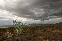 Monsoon Storm Rolls In (Eric Binns Photography) Tags: outside outdoors strobist offcameraflash offcameralighting pocketwizard storm clouds ocotillo cholla cactus mountains tontonationalforest arizona southwest landscape dramatic