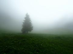 Fog (Marvin Macke) Tags: fog tree forest alps mystic landscape grey beautiful