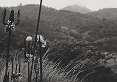 Devotion in the wild (RajeshFotos) Tags: devotion wilderness rain ooty tamilnadu india weapon drizzle intothewild