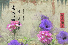 Ataraxis (Paul B0udreau) Tags: canada ontario paulboudreauphotography niagara d5100 nikon nikond5100 layer japanese nikkor70300mm ukiyoe photoshop tmi flower stems photomanipulation text