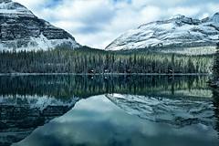 Lake O'Hara (lfeng1014) Tags: lakeohara yohonationalpark britishcolumbia canada landscape reflection lake mirror canadianrockies rockymountains mountain symmetrical peacefull travel lifeng pinetrees lakeshorecabins parkcanada