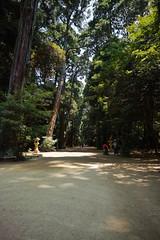 DP0Q0733 (chihiro2014) Tags: miyashita ibarakiken 日本 jp