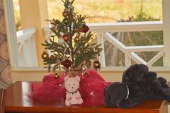 Christmas Tree and Pets (ronmcmanus1) Tags: animals antigua celebration decorations indoors jollyharbour stmarysparish antiguabarbuda