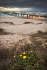 View From The Dunes || THE SPIT || GOLD COAST (rhyspope) Tags: australia aussie qld queensland theepit goldcoast gold coast beach sunrise flowers sanddunes dunes wharf pier rhys pope rhyspope canon 5d mkii