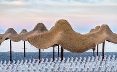 Canneto Canopies (jaxxon) Tags: 2017 d610 nikond610 jaxxon jacksoncarson nikon nikkor lens nikon50mmf28g nikkor50mmf28g 50mmf28 50mm niftyfiftyprime fixed pro multifarious cabana palm canopy umbrella canopies umbrellas cabanas beach canneto sunset evening sky sunrise chairs beachchairs stacked pattern repetition mediterranean aeolian island islands lipari seaside sea
