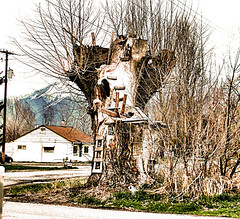 Treehouse in Ruins (Eyellgeteven) Tags: tree trees treetrunk trunk treehouse ladder rung rungs wooden wood branch branches cut 2x4 kids topped ruins bark dead old playhouse rural weird unusual strange bizarre abandoned rundown dilapidated eyellgeteven eyesore ugly