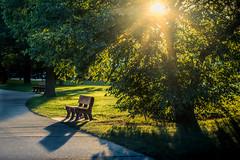 a seat in the sun (Christian Collins) Tags: canoneos5dmarkiv bench sundown evening path michigan midland mi downtown railtrail lowangle goldenhour atardecer tarde sunflare sunny