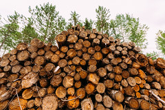 Cloquet Valley State Forest Logging (Tony Webster) Tags: cloquetvalley cloquetvalleystateforest minnesota forest stateforest timber trees duluth unitedstates us