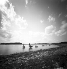 geese_at_lake_marburg (Judy M. Boyle) Tags: codorusstatepark codorus lakemarburg nature shanghaigp3 kodakd76 ondumkii6x6pinhole pinhole pinholephotography