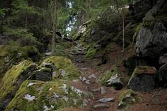 montée au Col des Arpettes (bulbocode909) Tags: valais suisse zinal mottec valdanniviers forêts arbres nature montagnes rochers sentiers vert mousses