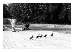 (bakmak71) Tags: canonae1 freiburg weingarten feelinggood enten ducks agfaapx100 scanvomnegativ adonal swfilm analog dietenbachgelände dietenbachfestspiele