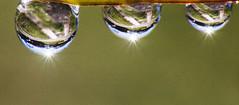 Three (LSydney) Tags: macromondays three waterdrops droplets macro