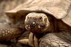Another angry grandmother (R.D. Gallardo) Tags: canon eos 6d raw retrato hdr tortuga animal turttle another angry grandmother 70200 cabarceno