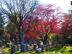 P1060622 (amiterangi1) Tags: woodlawncemetery autumn cemetery woodlawn