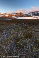 Dovrefjell sunset (Aidan C. MacDougald Nature Images) Tags: norway dovre dovrefjell oppdal mountain sunset solnedgang fjell norge snø snow nationalpark