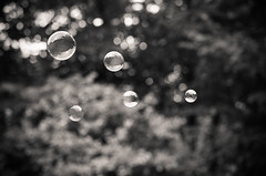 And We'll All Float On 206/365 (Watermarq Design) Tags: bubbles bokeh blackandwhite floating float flight 365project