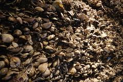 Joumon era shell midden (Stop carbon pollution) Tags: japan 日本 honshuu 本州 touhoku 東北 miyagiken 宮城県 okumatsushima 奥末島