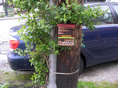 vacancy (barliquin) Tags: vacancy bees hive telephonepole ad streetside home hopeful