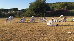 2017_kyokushinhellas_summercamp_1557