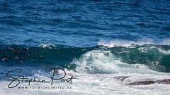 Robben und Hai (Foto-Unlimited) Tags: afrika brandung hai meer plettenberg bay robberg nature reserve südafrika tier wasser welle robben