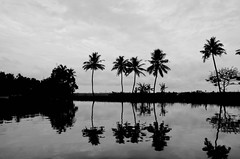 Alleppey, Kerala Back Waters (Parth_Joshi) Tags: kerala back waters palm tree coconut clouds morning nature d7000 india nikon alleppey
