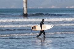 20170718_9511_7D2-200 Returning to shore (johnstewartnz) Tags: surf surfing pyzel pyzelsurfboard newbrighton newbrightonpier newbrightonbeach canon canonapsc apsc eos 7d2 7dmarkii canon7dmarkii canoneos7dmkii 70200mm 70200 winter