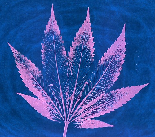 From flickr.com: Color Inverted Cannabis - 2017 {MID-146472}