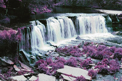 keila (inmno) Tags: lomochrome purple lomography aerochrome minolta ishootfilm