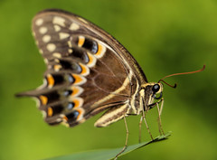 Lovely to Meet You (dianne_stankiewicz) Tags: beauty insect nature butterfly allnaturesparadise