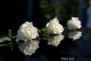 White roses on the car