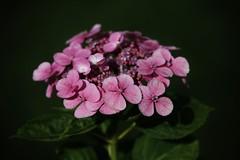 Flower (Hugo von Schreck) Tags: hugovonschreck makro blume blüte flower macro canoneos5dsr tamron28300mmf3563divcpzda010 onlythebestofnature