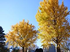 P1060714 (amiterangi1) Tags: woodlawncemetery autumn cemetery woodlawn