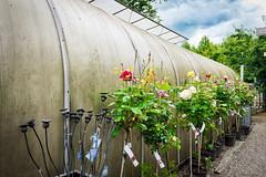 Tirups Örtagård (greenhouse) (Guill_B) Tags: playground plantnursery print flower shop tirupsörtagård suède tirup scanie greenhouse skåne sverige sweden airedejeux skånelän se