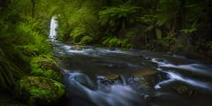 Hopetoun Falls (Mark McLeod 80) Tags: australia greatoceanroad markmcleod markmcleodphotography otwaysnationalpark theotways vic victoria forest water waterfall pano