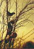 Cotorra en árbol de granadas. (ElDisparoRevelado) Tags: nikon nikonfg fotoanaloga redscale 35mm analog ave birds parrot cotorra filmforever beliveinfilm stgoanalogo aves santiagoanalogo camaraanaloga camaraanalogica bifscale17 chileanalogo chile35mm santiago35mm