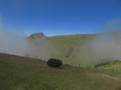 Standing strong (RIch-ART In PIXELS) Tags: madeira portugal tree canon fog mist sky clouds landscape fields grassland green bush shrub